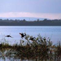 на озере  в Карелии :: Елена Маковоз