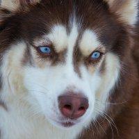 Эти глаза напротив.... :: Николай