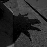 Причудливая тень... :: Павел Зюзин