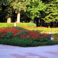 Клумба в парке... :: Тамара (st.tamara)