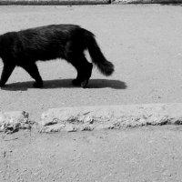 черный кот :: Юлия Закопайло