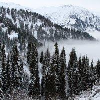 Над туманом (Алматинские горы) :: Александр Лунев