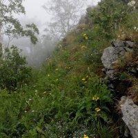 Туман в горах :: Владимир Смирнов