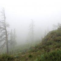 Туман :: Владимир Смирнов