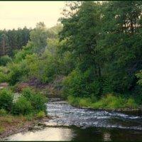 Река Боровка (взгляд по течению). :: Elena Izotova