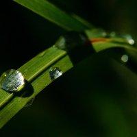 капли воды на траве :: Андрей Иванов