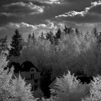 Белое лето :: ВАЛЕРИЙ