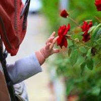Дети - цветы жизни :: Denis Makarenko