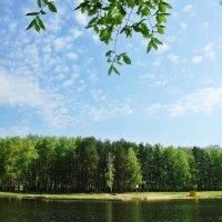 Пруд весной :: Лидия (naum.lidiya)