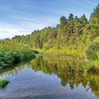В чистой воде лес отражается :: Юрий Кузмицкас