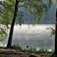 В лёгком тумане.... :: Юрий Цыплятников