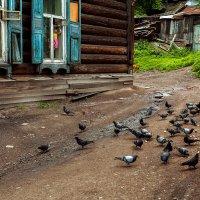 Девочка и голуби :: Павел Крутенко