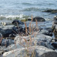 Трава и камень :: Елена
