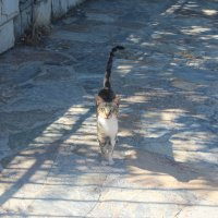 Кошка :: Мария Лебедева