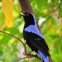 птичка :: Августа