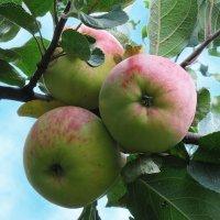 С яблочным спасом! :: Nikolay Monahov