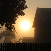 Туманное утро :: Darina Pogodaeva