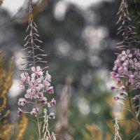 Цветы :: Денис Спахов