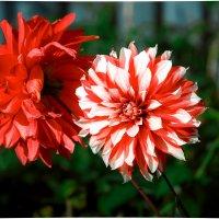 Красивые обои :: Лёха Антипин