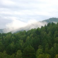 Облако в горном лесу :: Наталья Золотых-Сибирская