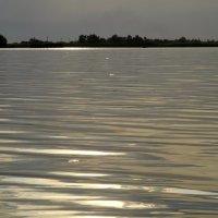 Озеро. :: Лариса Авдонина