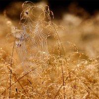 Лето мчится и машет крылом... :: Юрий Савинский