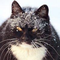 Кошка в засаде на мышек :: Павел Крутенко