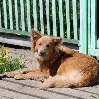 Ещё один добрейший пёсик :: Larissa1425 M