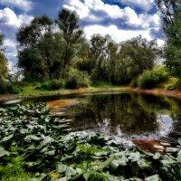 Кувшинковая поляна :: Сергей S.Tulpan