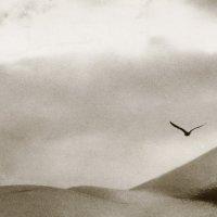 пролетая над гнездом кукушки :: Николай Пушилин