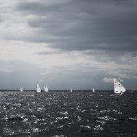 лебеди в черной воде :: Анастасия Фёдорова