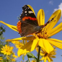 Яркий август :: lady v.ekaterina
