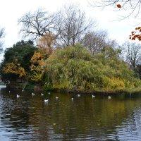Парк в Дублине. :: zoja