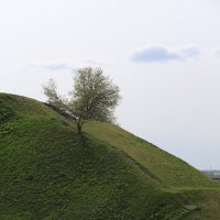 Лестница для дерева :: Дмитрий Авдонин