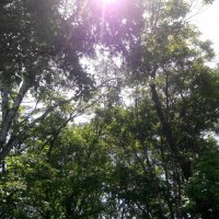 Деревья :: Martin Street