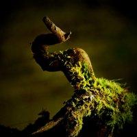 Во мгле лесной :: Валерий Талашов