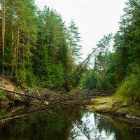 река Ворон :: Павел Фролов