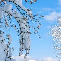 Снег в марте... :: Елена Васильева