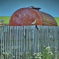 Птичка села на забор... :: Валерий Талашов