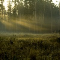 Опушка утром :: Дмитрий Кошелев