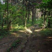 Любимый ельник IMG_5741 :: Андрей Лукьянов