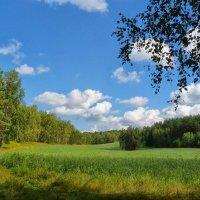 Поле среди леса :: Serz Stepanov