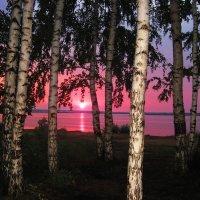 Розовый вечер :: Геннадий Ячменев