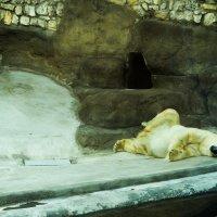сладко спит:)) :: Саша Ш.