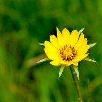 Цветок :: Юлия EtheReal2304