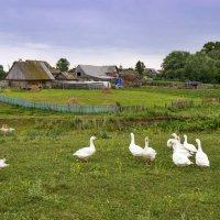 Лето в деревне :: Любовь Потеряхина