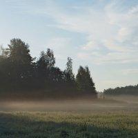 Утро в лугах... :: Юрий Цыплятников