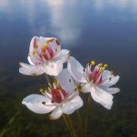 На озере :: Анна Елтышева