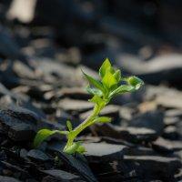 Камни, не камни, а расти-то надо! :: Денис Антонов