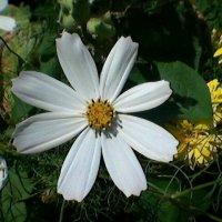 Белый цветок :: Миша Любчик
